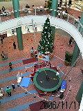 もうクリスマスツリーなんだよね