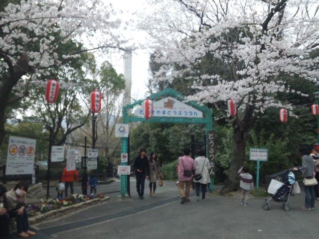 五月山動物園でお花見しました